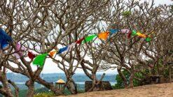 22-daagse fly-drive Grand Tour Sri Lanka - Singletravels.nl