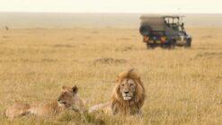 9-daagse safari Verrassend Tanzania icm Zanzibar - Singletravels.nl