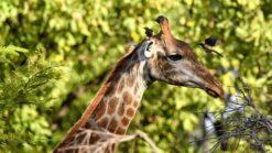 8-dg combinatiereis Fathala Wildlife Experience - Singletravels.nl