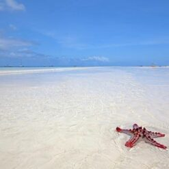 9-daagse safari Fly-In Selous icm Zanzibar - Singletravels.nl