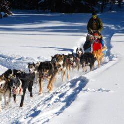 Winters Lapland - Singletravels.nl