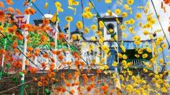 Bloemenfestival Madeira - Singletravels.nl