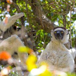 Uniek Madagaskar - Singletravels.nl