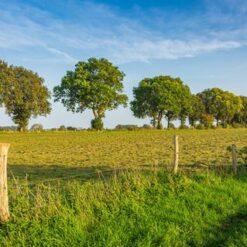 Singlereis Fietsen Bourgondisch Brabant - Singletravels.nl