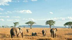 12-daagse Rondreis Wildparken van Tanzania - Singletravels.nl