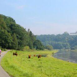 7-daagse busreis Fietsen door Thüringen en Saksen - Singletravels.nl