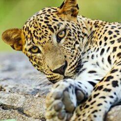 12-daagse rondreis Beste van Sri Lanka incl. RIU - Singletravels.nl