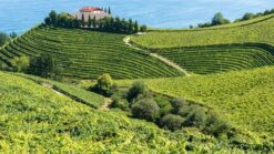8-daagse rondreis Baskenland & la Rioja - Singletravels.nl