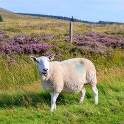 8-daagse Wandelreis Ierland - Wicklow Way - Singletravels.nl